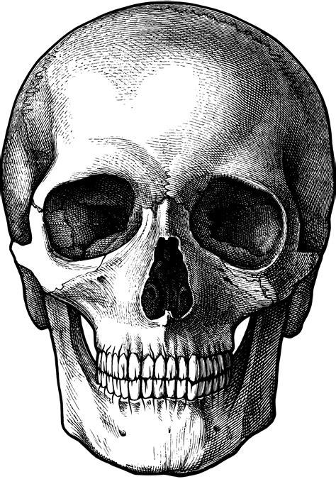 photo skull anatomy human spooky