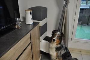 Laisser Un Chien Seul Quand On Travaille : furbo dog camera cap cie blog d 39 un chien sportif ~ Medecine-chirurgie-esthetiques.com Avis de Voitures