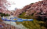 猴子妹的飛翔: [日本。東京] 2014櫻@外濠公園-->靖國神社-->千鳥ヶ淵