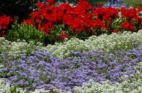 landscape color schemes ideas  plant combinations