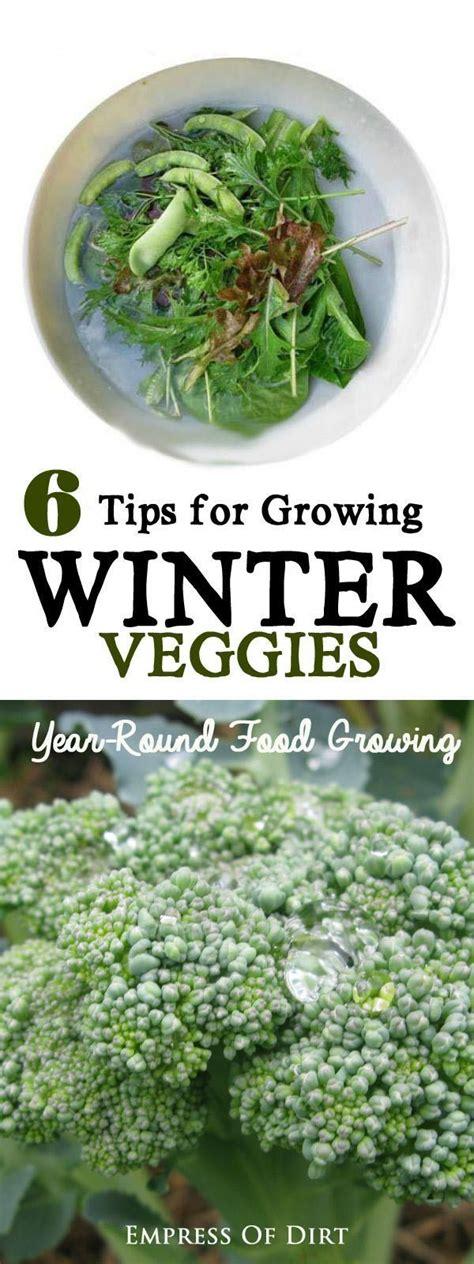 6 Tips For Growing Winter Veggies