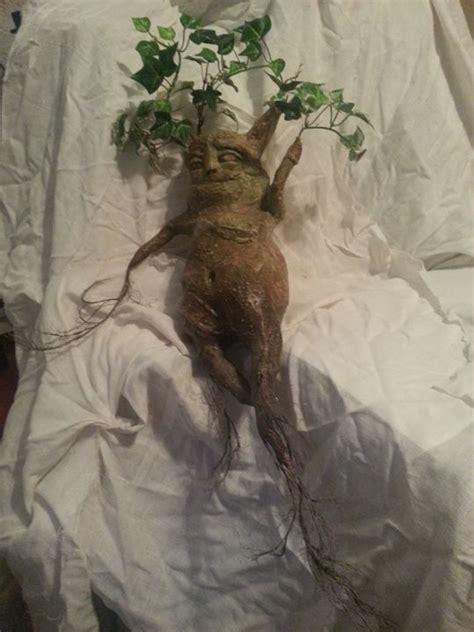 mandrake root potter harry ent diy kitchen fantasy paper thea witch mandragora krafty artpal magic mythology tree earn learn pumpkin
