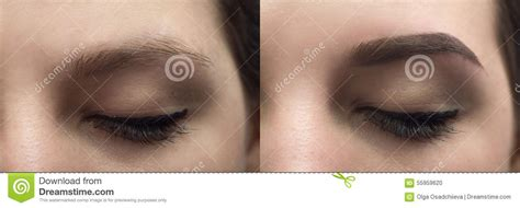perfect eyebrows   stock photo image  hair