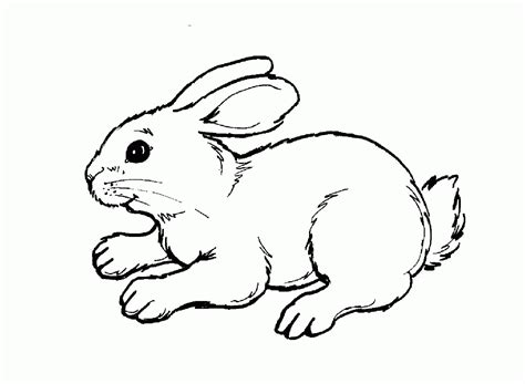 Coloring Animal Pictures by Woodland Animal Coloring Page Coloring Home