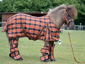 Sellerie On Line : mat riel shetland sp ce rare 3 forum cheval ~ Medecine-chirurgie-esthetiques.com Avis de Voitures