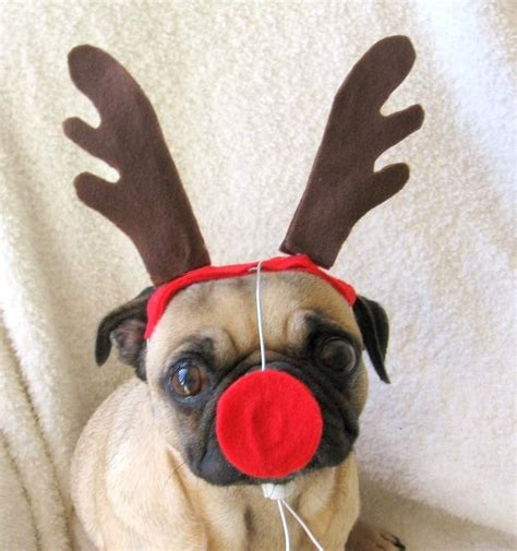 rudolph the red nosed dog or cat christmas antlers
