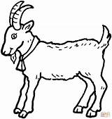 Coloring Goat Billy Goats Printable Colouring Kozy sketch template