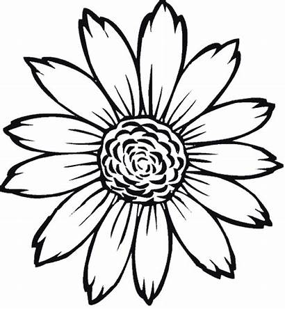 Flores Colorear Dibujos Imagenes Sin Plantillas Gerberas