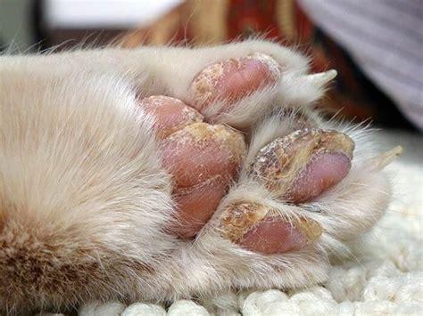 infection oreille chien traitement maison teigne du chat rem 232 des maison rem 232 des naturels pour animaux rem 232 des naturels pour animaux