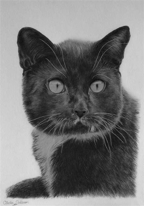 black cat drawing  odette  deviantart