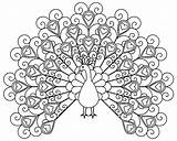 Coloring Peacocks Pages Simple Children Adult Printable Justcolor sketch template