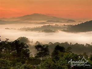 Danum Valley- Danum Valley Rainforest Adventure - Amazing ...