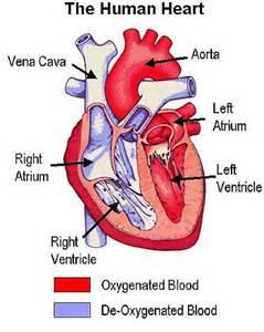 Cardiovascular Disease Cardiovascular Diseases And Disorders