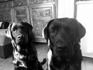 Laver Chien Savon Noir : savon noir pour laver son chien ~ Melissatoandfro.com Idées de Décoration