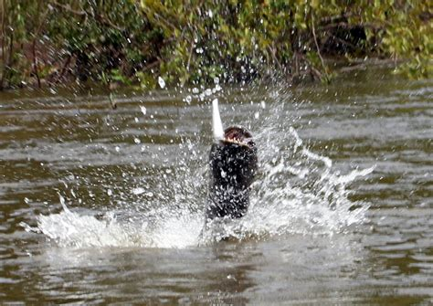 catch wolf fish
