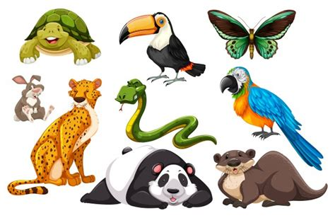 Different Kinds Of Wild Animals Illustration Vector