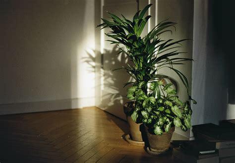 plantes chambre fond d 39 écran fenêtre chambre les plantes ombre mur