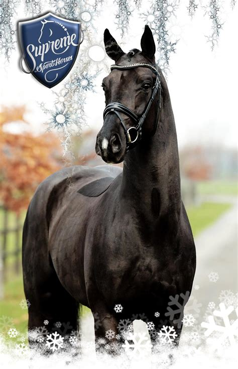 Back To Black 2017 Licensed And Approved Stallion