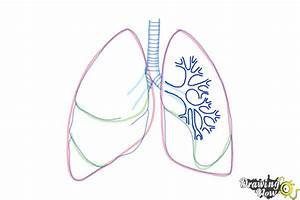 How To Draw Lungs