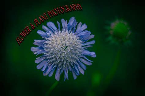 stunning photographs  flowers  plants