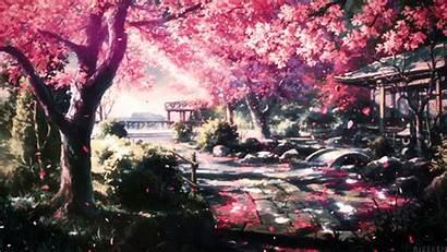 Blossom Cherry Anime Khadijah Google Hidup Riwayat