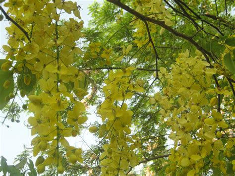 summer flowering trees 301 moved permanently