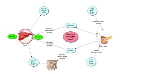 Map Endocrine System Chemical Communication Concept