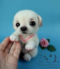 Cute Baby Chihuahua Puppies Apple Head