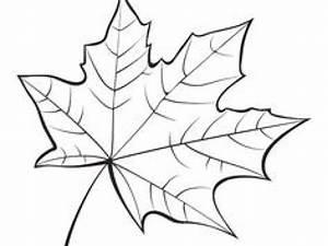 Feuilles D Automne à Imprimer : coloriage de feuilles d automne dessin coloriage feuille automne pinterest ~ Nature-et-papiers.com Idées de Décoration