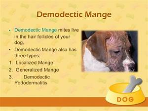 Mange In Dogs Ears Red Types Symptoms Causes Home   Autos Post