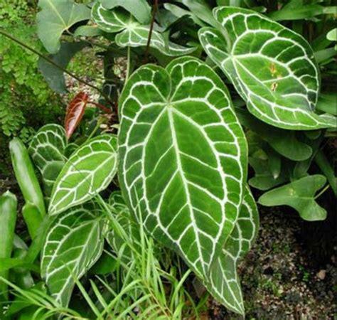 aneka jenis produk budidaya tanaman hias tanaman hias