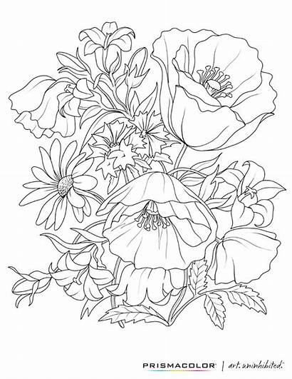 Coloring Adult Flower Pages Colouring Flowers Printable