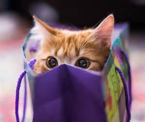 cat in a bag fall fundraising auction october 25th cat network