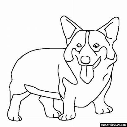 Corgi Dog Welsh Coloring Pages Clipart Drawing