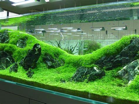 planted freshwater aquarium  fine carpet rolling