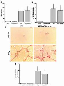 4a3coohmethyl Administration And Liver Fibrosis In A Rat