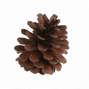 Pom De Pin Sallanches : 4 pommes de pin 6 cm loisirs cr atifs tous les ~ Premium-room.com Idées de Décoration