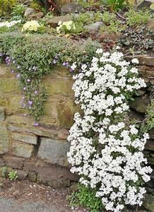 Pflanzen Für Trockenmauer : die besten 25 winterharte pflanzen ideen auf pinterest winterharte pflanzen f r balkon ~ Orissabook.com Haus und Dekorationen