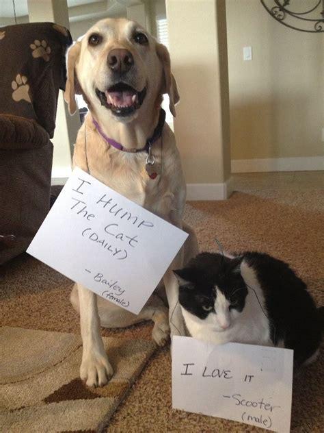 dog shame  hump  cat daily    dog shame