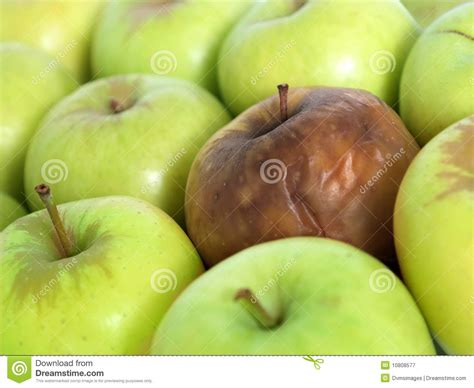 bad apple   bunch royalty  stock photography