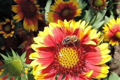 Bienenfreundliche Pflanzen Auf Balkon, Terrasse Und Garten