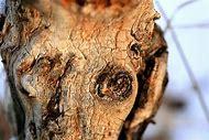 Creepy Tree Face