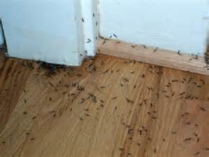 Control Ants In Kitchen by Subterranean Termites Pest Control Services For Life