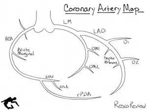 Coronary Artery Diagram