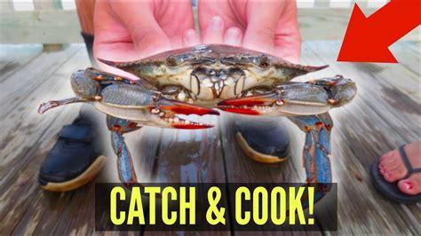crabs eat cook catch