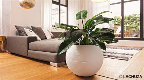 plante cuisine decoration décoration maison plante