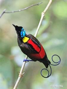 1000 idees a propos de oiseaux jaunes sur pinterest With nice toute les couleurs de peinture 6 peinture oiseau multicolore
