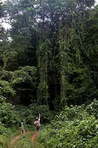 Chirinda Forest Botanical Reserve