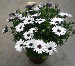 PLANTES FLEURIES D39EXTERIEUR