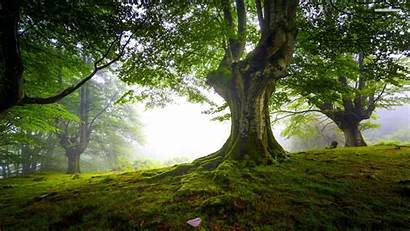 Tree Trees Background Wallpapers Backgrounds Forest Desktop